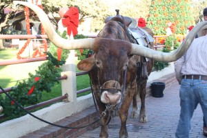Ft-Worth-Stockyards-Longhorn
