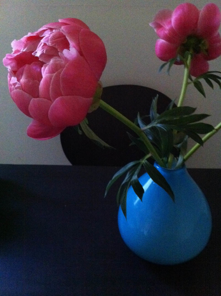 peonies-full-pink