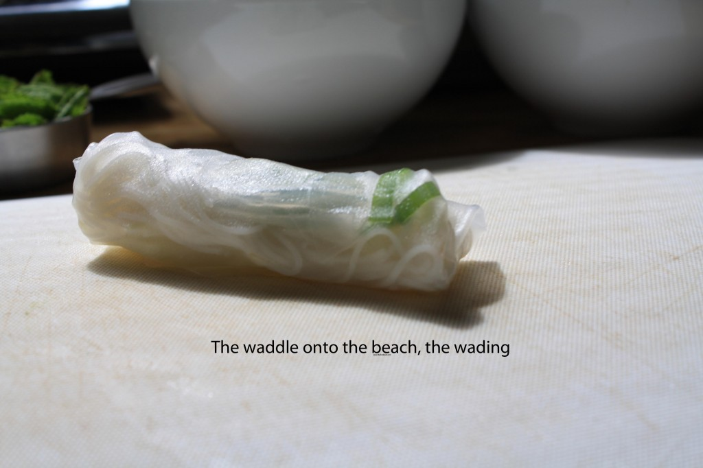 the waddle onto the beach