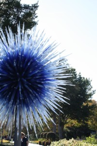 Dallas-Arboretum-Chihuly-Blue-Star