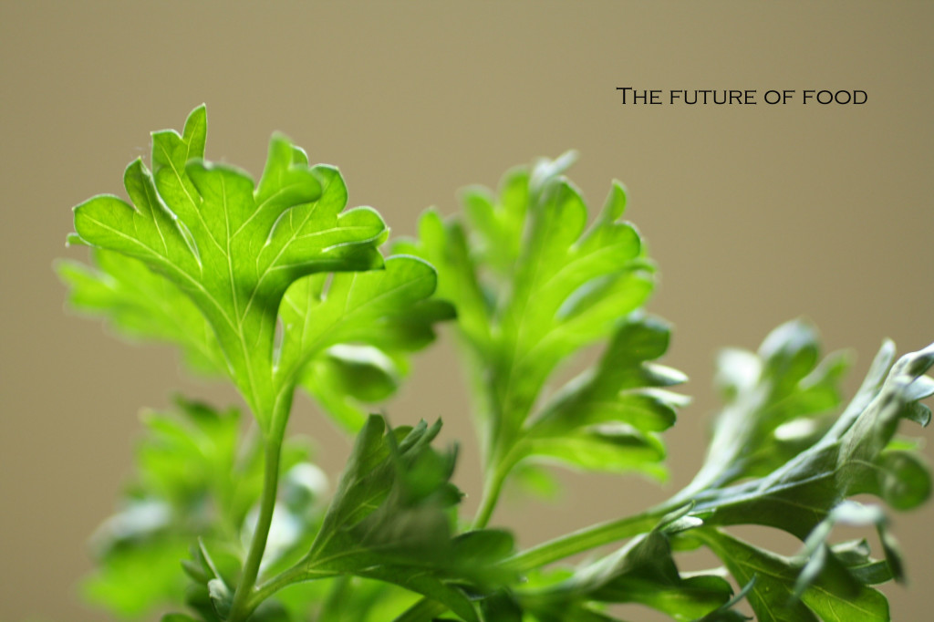 the future of food - the food poet