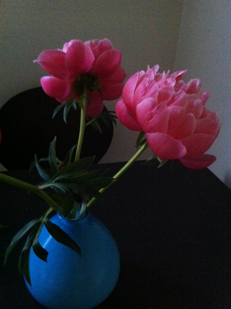 peonies-color-beginning-to-fade