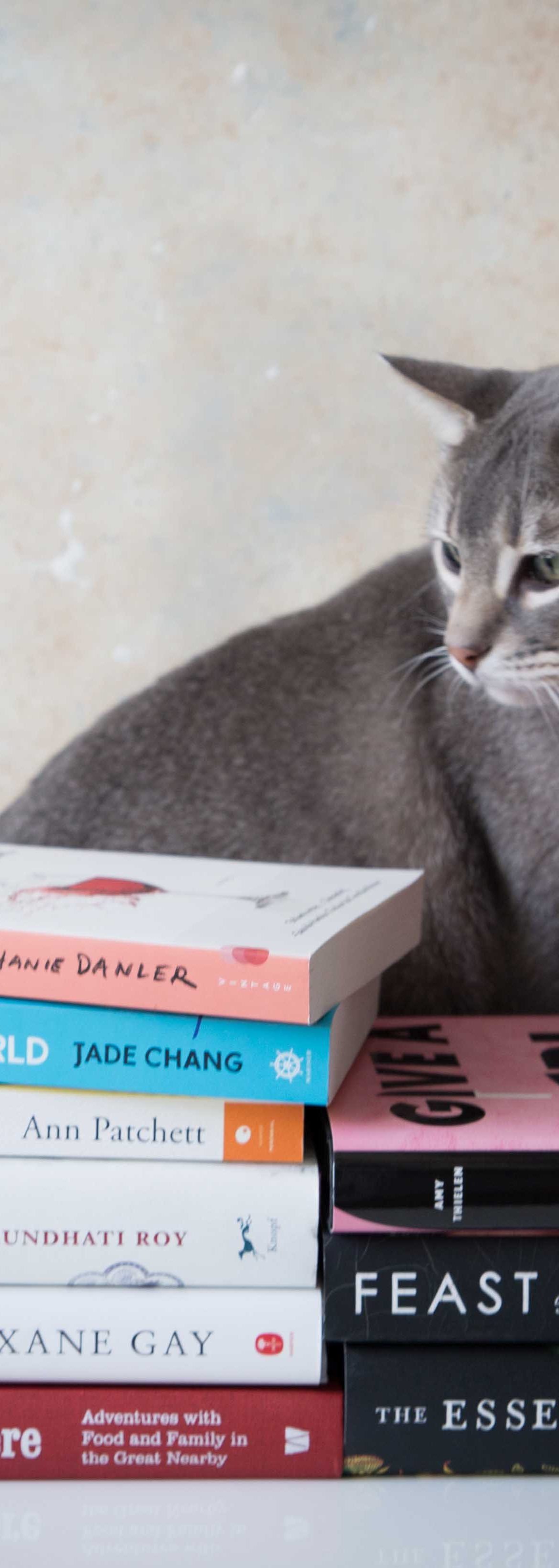 Cats on books. These are Chai's favorite 2017 summer reads